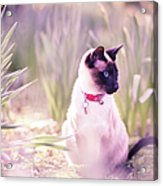 Cat Sitting By Daffodils Acrylic Print by Sasha Bell