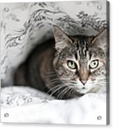 Cat Under In Blankets Acrylic Print by Image taken by Mayte Torres