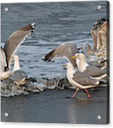 Catch Me If You Can  Acrylic Print by Debra  Miller
