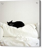 Catheaven Acrylic Print by Licensed Material