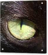 Cat's Eye Acrylic Print by Shannon Blanchard