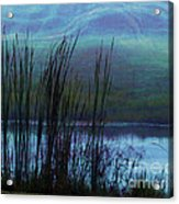 Cattails In Mist Acrylic Print by Judi Bagwell