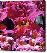 Celebration Too Acrylic Print by Alcina Morello