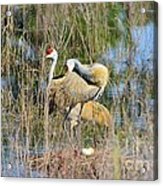 Changing Of The Guards 2 Acrylic Print by Lynda Dawson-Youngclaus