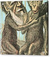 Charles Darwin Caricature, 1874 Acrylic Print by Science Source