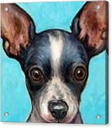 Chihuahua Puppy With Big Ears Acrylic Print by Dottie Dracos