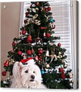 Christmas Card Dog Acrylic Print by Vijay Sharon Govender