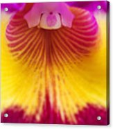 Close Up Of A Cattleya Orchid (cattleya Sp) Acrylic Print by Mike Hill