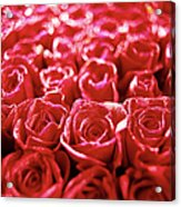 Close-up Of A Mass Of Red Roses Acrylic Print by Stockbyte