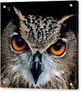 Close Up Of An African Eagle Owl Acrylic Print by Joel Sartore