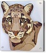 Clouded Leopard Acrylic Print by Annja Starrett