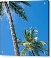 Coconuts  Acrylic Print by Atiketta Sangasaeng