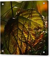 Color Jungle Acrylic Print by Odd Jeppesen