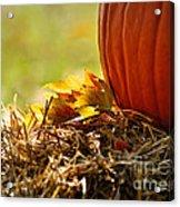Colorful Autumn Acrylic Print by Nava Thompson