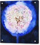 Cosmic Bloom Acrylic Print by Tara Thelen