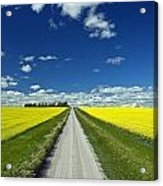 Country Road With Blooming Canola Acrylic Print by Dave Reede