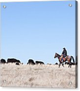 Cowboy And Cattle Acrylic Print by Cindy Singleton