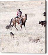 Cowboy Acrylic Print by Cindy Singleton