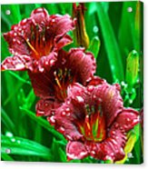 Crimson Lilies In April Shower Acrylic Print by Lisa  Spencer