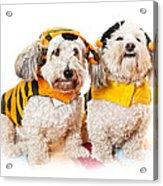 Cute Dogs In Halloween Costumes Acrylic Print by Elena Elisseeva