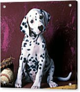 Dalmatian Puppy With Baseball Acrylic Print by Garry Gay