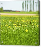 Dandelions Growing In Meadow Acrylic Print by Stock4b-rf
