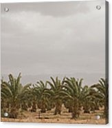 Date Palm Trees In An Orchard Acrylic Print by Taylor S. Kennedy