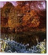 Deciduous Woods, In Autumn With Frost Acrylic Print by The Irish Image Collection
