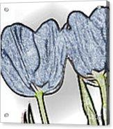 Denim Tulips Acrylic Print by Cheryl Young