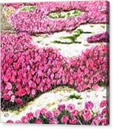 Desert Flowers Acrylic Print by Glenda Zuckerman