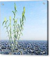 Desert Plant, Artwork Acrylic Print by Carl Goodman