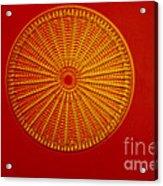 Diatom - Arachnoidiscus Ehrenbergi Acrylic Print by Eric V. Grave