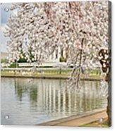 Digital Liquid - Cherry Blossoms Washington Dc 6 Acrylic Print by Metro DC Photography