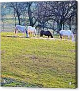 Dinner At Five Acrylic Print by Jan Amiss Photography