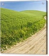 Dirt Road Through Field, Palouse, Washington Acrylic Print by Paul Edmondson