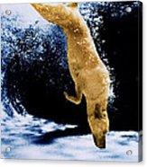 Diving Dog Acrylic Print by Jill Reger