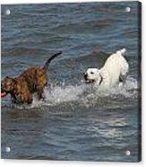 Dog 105 Acrylic Print by Joyce StJames