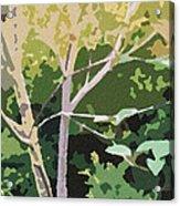 Dogwood I Acrylic Print by Katharine Birkett
