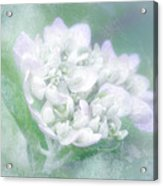 Dreaming Floral Acrylic Print by Brenda Bryant