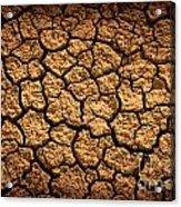 Dried Terrain Acrylic Print by Carlos Caetano