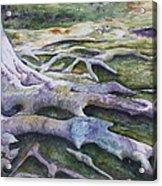 Dunbar Cave Roots  Acrylic Print by Patsy Sharpe