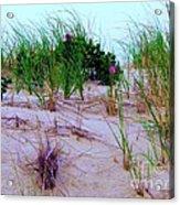 Dunes Acrylic Print by Susan Carella