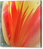 Duotone Tulip Blowing In The Wind Acrylic Print by Heinz G Mielke