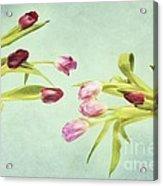 Eager For Spring Acrylic Print by Priska Wettstein