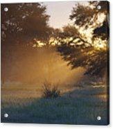 Early Morning Sun Beams Through Branches Of A Tree Acrylic Print by Heinrich van den Berg