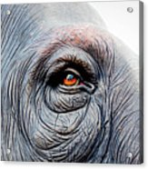 Elephant Eye Acrylic Print by Selvin