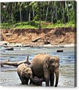 Elephant Family Acrylic Print by Jane Rix