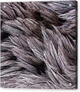 Emu Feathers Acrylic Print by Hakon Soreide