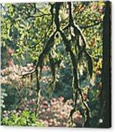 Epiphytic Moss Acrylic Print by Doug Allan