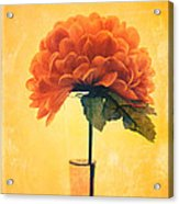 Estillo - 01i2t03 Acrylic Print by Variance Collections